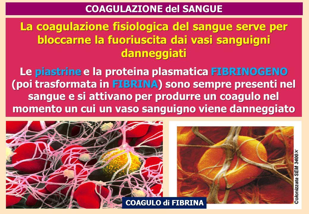 La coagulazione fisiologica del sangue serve per bloccarne la fuoriuscita dai vasi sanguigni danneggiati Le piastrine e la proteina plasmatica FIBRINO