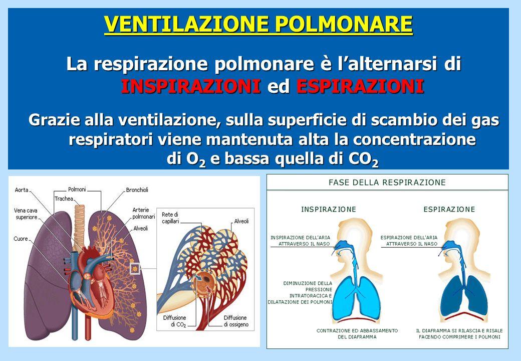 VENTILAZIONE POLMONARE La respirazione polmonare è lalternarsi di INSPIRAZIONI ed ESPIRAZIONI Grazie alla ventilazione, sulla superficie di scambio de