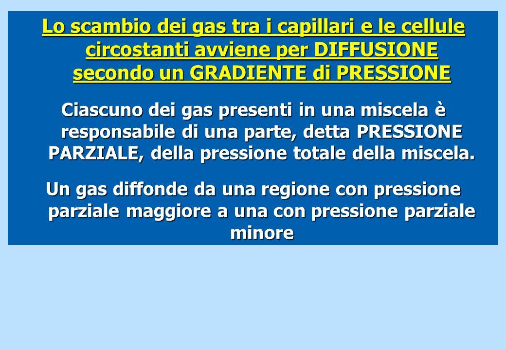 Lo scambio dei gas tra i capillari e le cellule circostanti avviene per DIFFUSIONE secondo un GRADIENTE di PRESSIONE Ciascuno dei gas presenti in una