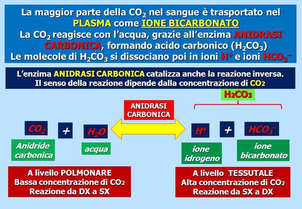 La maggior parte della CO 2 nel sangue è trasportato nel PLASMA come IONE BICARBONATO La CO 2 reagisce con lacqua, grazie allenzima ANIDRASI CARBONICA