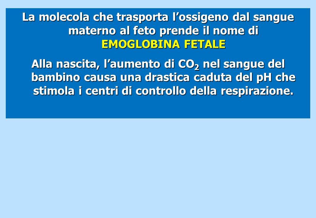 La molecola che trasporta lossigeno dal sangue materno al feto prende il nome di EMOGLOBINA FETALE Alla nascita, laumento di CO 2 nel sangue del bambi