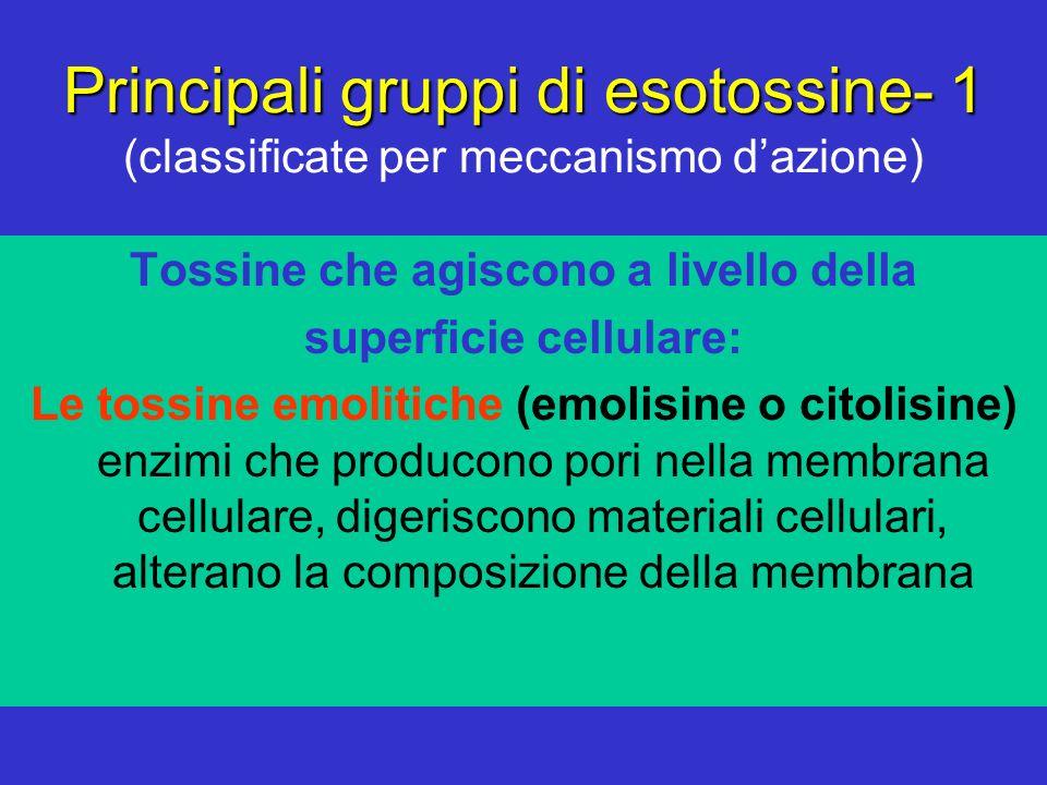 Principali gruppi di esotossine- 1 Principali gruppi di esotossine- 1 (classificate per meccanismo dazione) Tossine che agiscono a livello della super