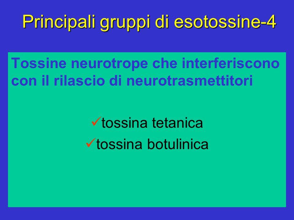 Principali gruppi di esotossine-4 Tossine neurotrope che interferiscono con il rilascio di neurotrasmettitori tossina tetanica tossina botulinica