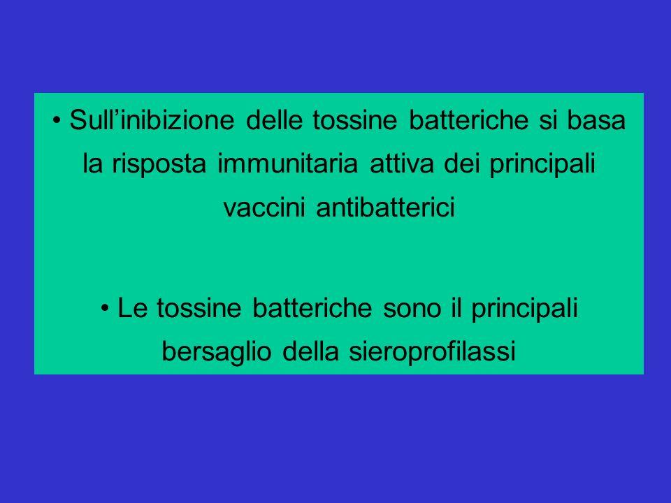Sullinibizione delle tossine batteriche si basa la risposta immunitaria attiva dei principali vaccini antibatterici Le tossine batteriche sono il principali bersaglio della sieroprofilassi