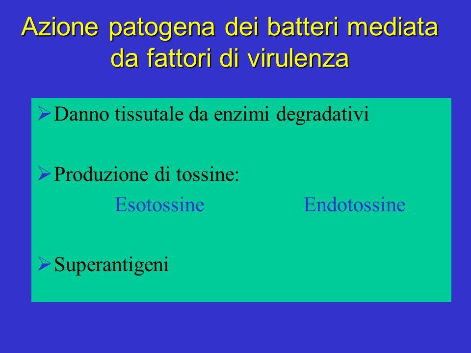 Azione patogena dei batteri mediata da fattori di virulenza Danno tissutale da enzimi degradativi Produzione di tossine: Esotossine Endotossine Superantigeni
