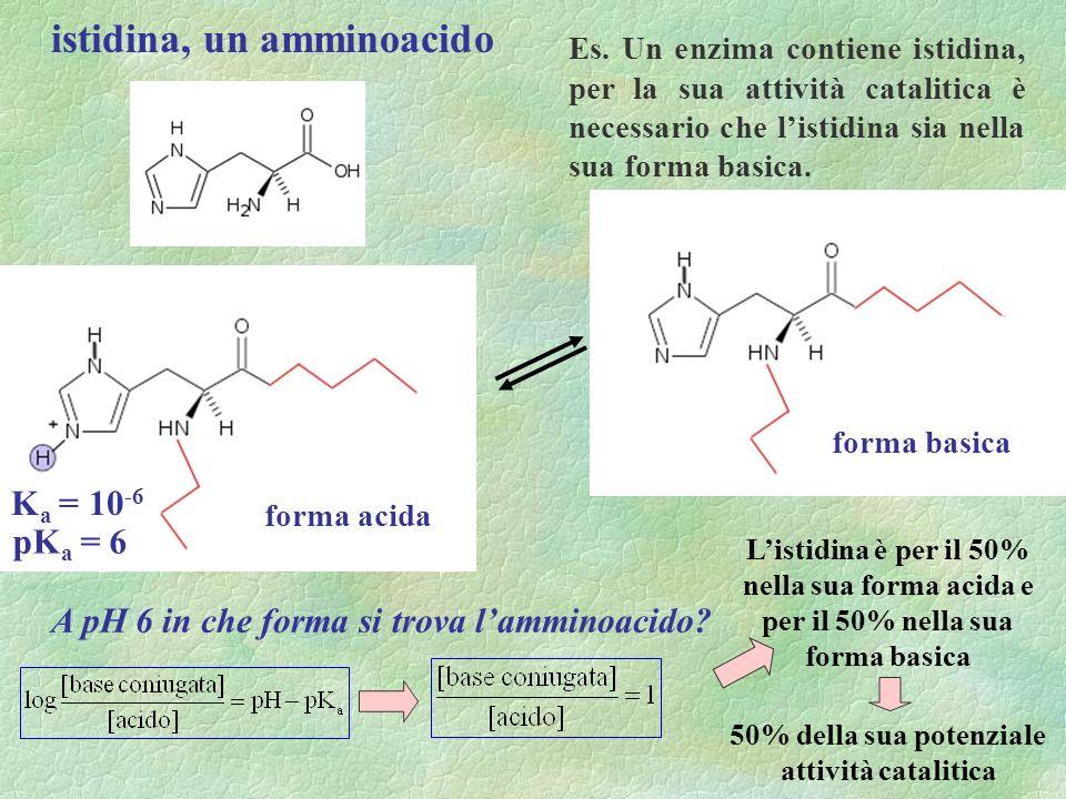 istidina, un amminoacido Es. Un enzima contiene istidina, per la sua attività catalitica è necessario che listidina sia nella sua forma basica. forma
