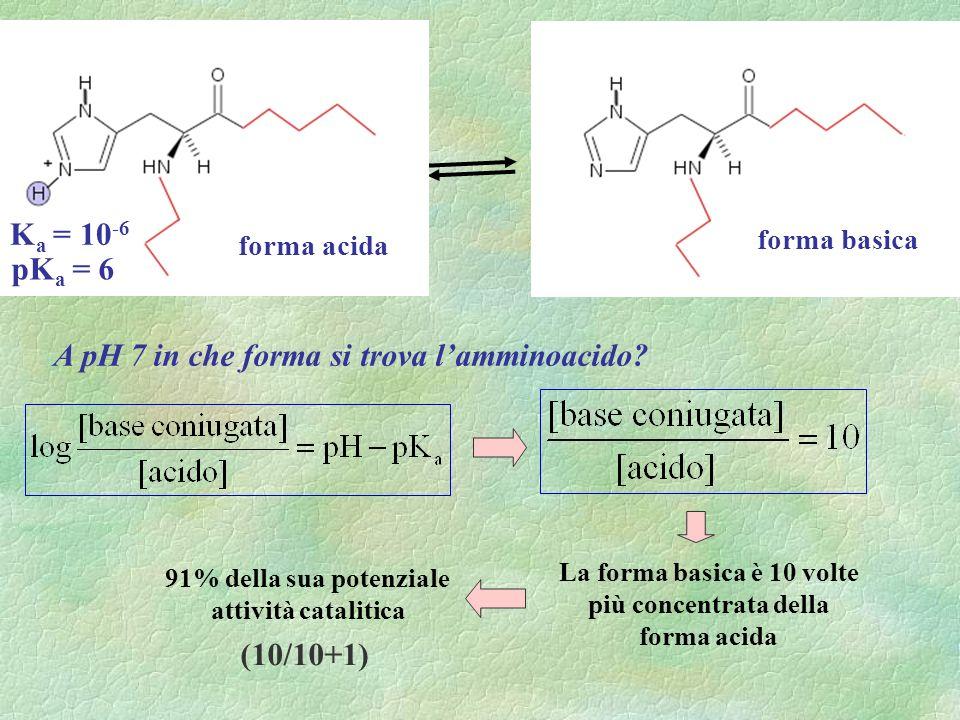forma basica A pH 7 in che forma si trova lamminoacido? La forma basica è 10 volte più concentrata della forma acida 91% della sua potenziale attività