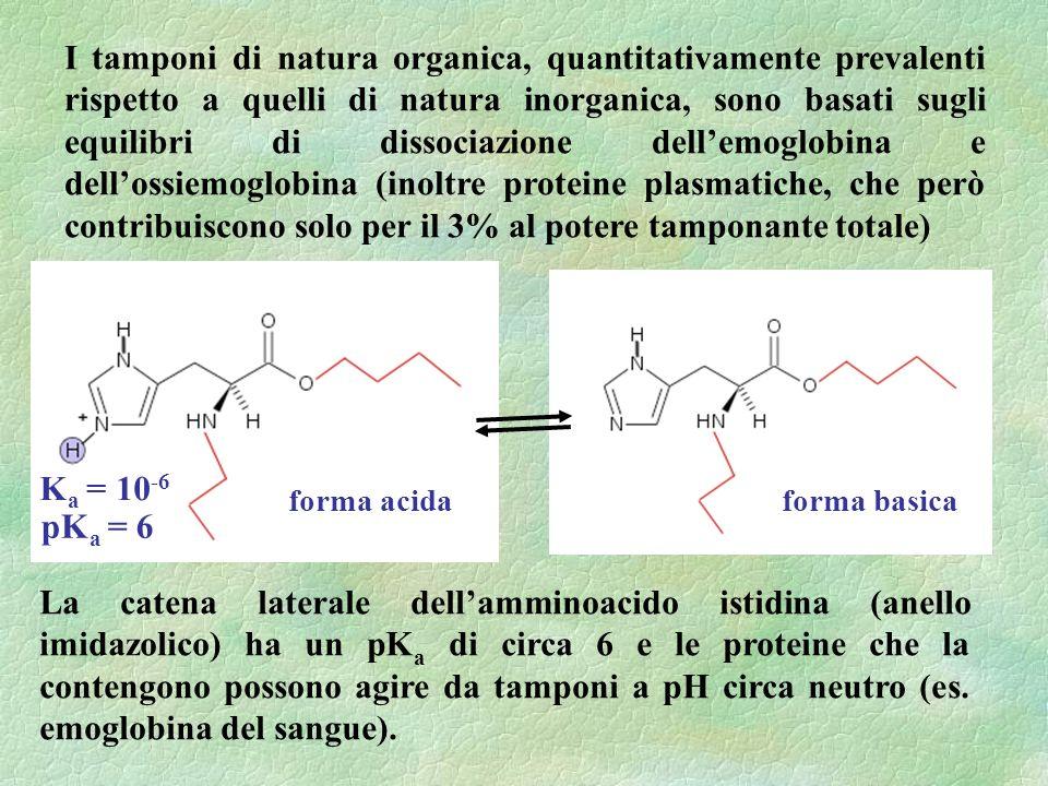 I tamponi di natura organica, quantitativamente prevalenti rispetto a quelli di natura inorganica, sono basati sugli equilibri di dissociazione dellemoglobina e dellossiemoglobina (inoltre proteine plasmatiche, che però contribuiscono solo per il 3% al potere tamponante totale) La catena laterale dellamminoacido istidina (anello imidazolico) ha un pK a di circa 6 e le proteine che la contengono possono agire da tamponi a pH circa neutro (es.