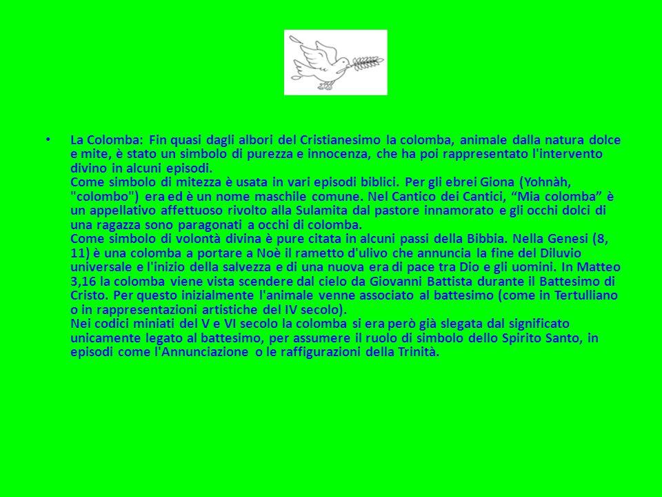 La Colomba: Fin quasi dagli albori del Cristianesimo la colomba, animale dalla natura dolce e mite, è stato un simbolo di purezza e innocenza, che ha