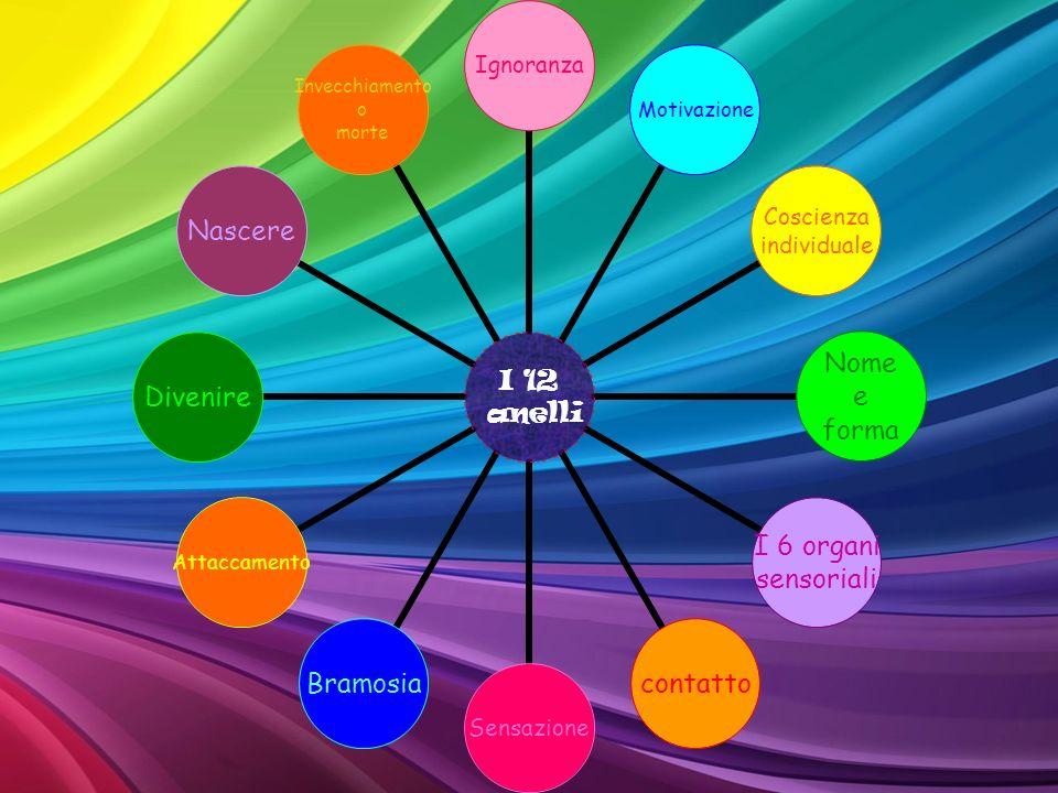 I 12 anelli IgnoranzaMotivazione Coscienza individuale Nome e forma I 6 organi sensoriali contattoSensazioneBramosiaAttaccamentoDivenireNascere Invecc