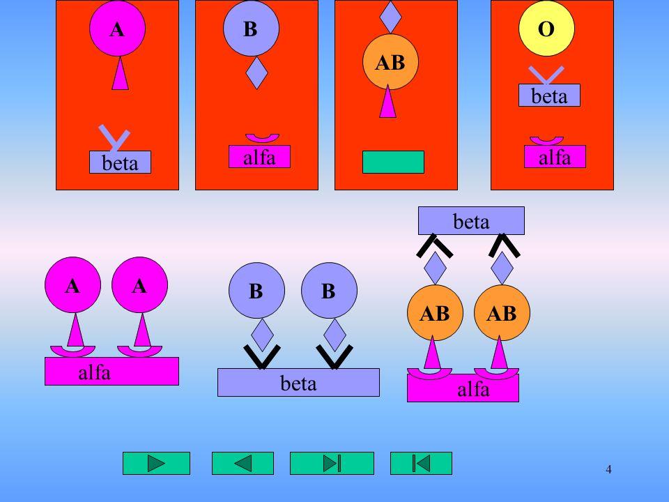 5 AB AB O beta alfa beta Antigene A non deve incontrare anticorpo antiA,alfa Antigene B non deve incontrare anticorpo antiB,beta