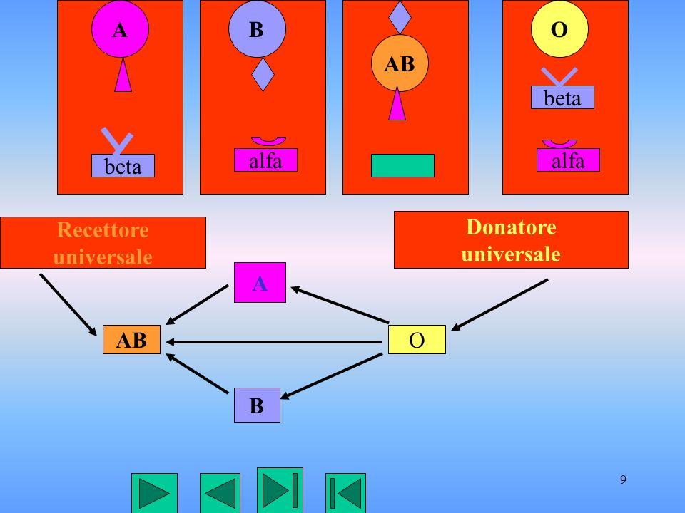 9 AB AB O beta alfa beta A B ABO Recettore universale Donatore universale