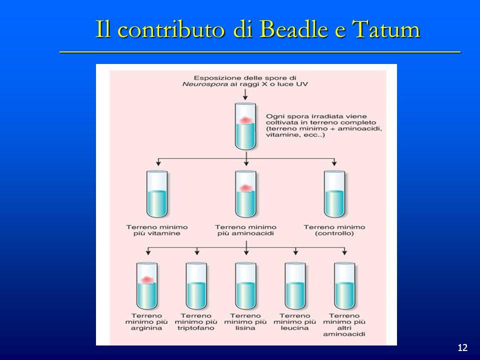 12 Il contributo di Beadle e Tatum