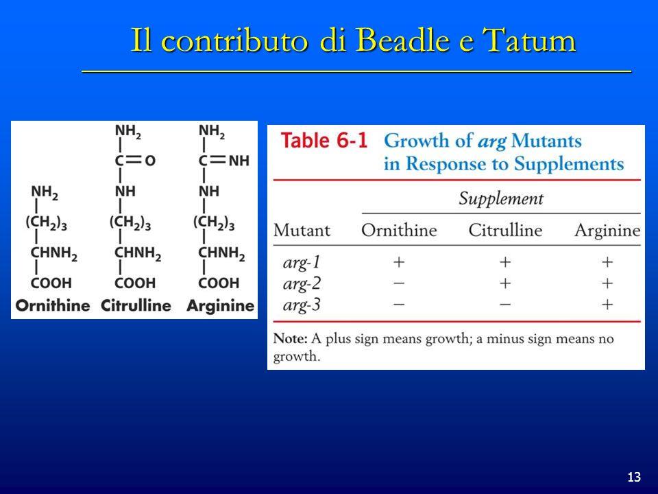 13 Il contributo di Beadle e Tatum