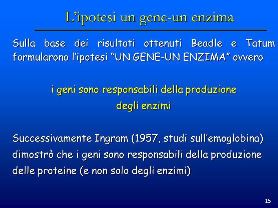15 Lipotesi un gene-un enzima Sulla base dei risultati ottenuti Beadle e Tatum formularono lipotesi UN GENE-UN ENZIMA ovvero i geni sono responsabili