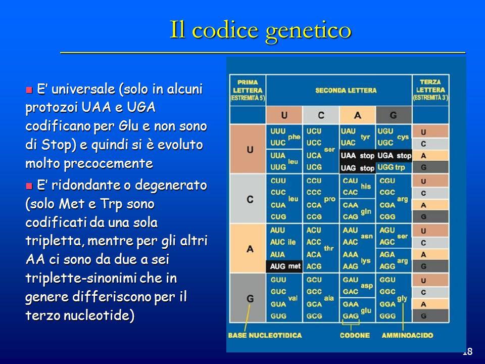 18 Il codice genetico E universale (solo in alcuni protozoi UAA e UGA codificano per Glu e non sono di Stop) e quindi si è evoluto molto precocemente
