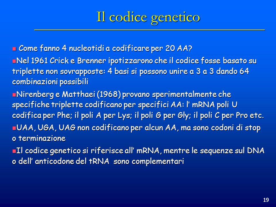 19 Il codice genetico Come fanno 4 nucleotidi a codificare per 20 AA? Come fanno 4 nucleotidi a codificare per 20 AA? Nel 1961 Crick e Brenner ipotizz