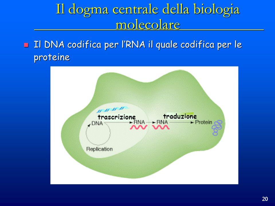 20 Il dogma centrale della biologia molecolare Il DNA codifica per lRNA il quale codifica per le proteine Il DNA codifica per lRNA il quale codifica p