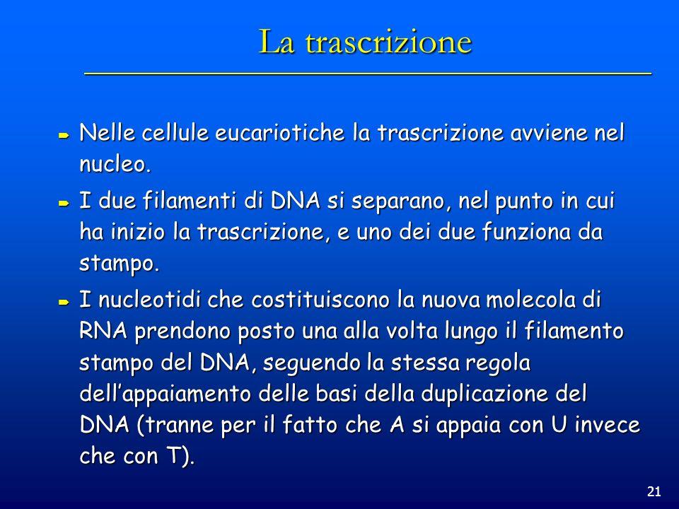 21 La trascrizione Nelle cellule eucariotiche la trascrizione avviene nel nucleo. Nelle cellule eucariotiche la trascrizione avviene nel nucleo. I due