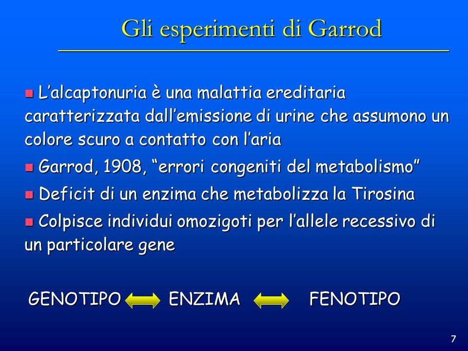 7 Gli esperimenti di Garrod Lalcaptonuria è una malattia ereditaria caratterizzata dallemissione di urine che assumono un colore scuro a contatto con