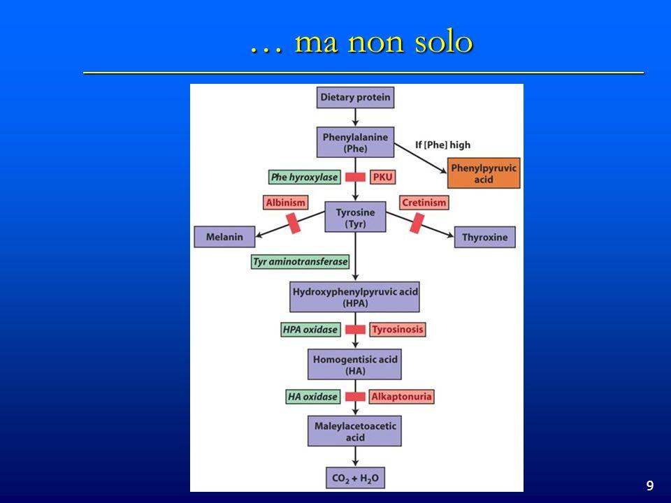 20 Il dogma centrale della biologia molecolare Il DNA codifica per lRNA il quale codifica per le proteine Il DNA codifica per lRNA il quale codifica per le proteine