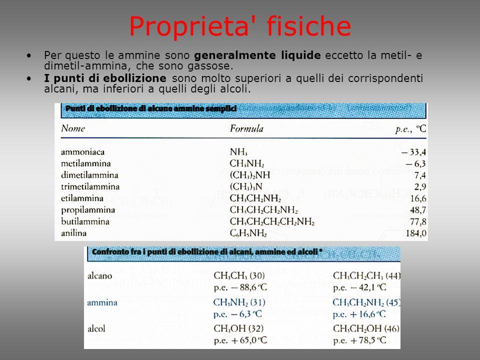 Basicità delle ammine Il carattere nucleofilo conferisce a tutte le ammine caratteristiche di basicità.