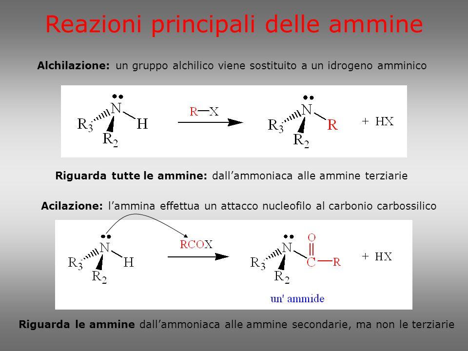 Reazioni principali delle ammine Alchilazione: un gruppo alchilico viene sostituito a un idrogeno amminico Riguarda tutte le ammine: dallammoniaca all