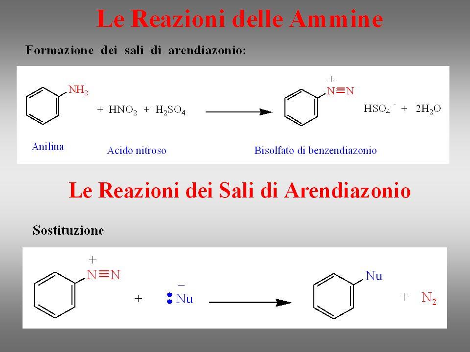 Sali delle ammine Molti sali di ammine, di origine naturale o sintetica, rivestono notevole importanza biologica.