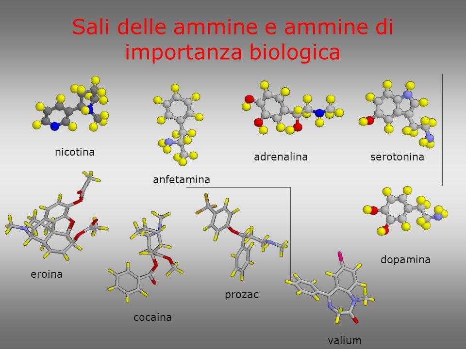 2-feniletanammina 1-fenil-2-propanammina (anfetammina) nor-adrenalina adrenalina 2-amminoetanolo (etanolammina) 1,4-butandiammina (putrescina) 1,5-pentandiammina (cadaverina) pirrolidina 3D