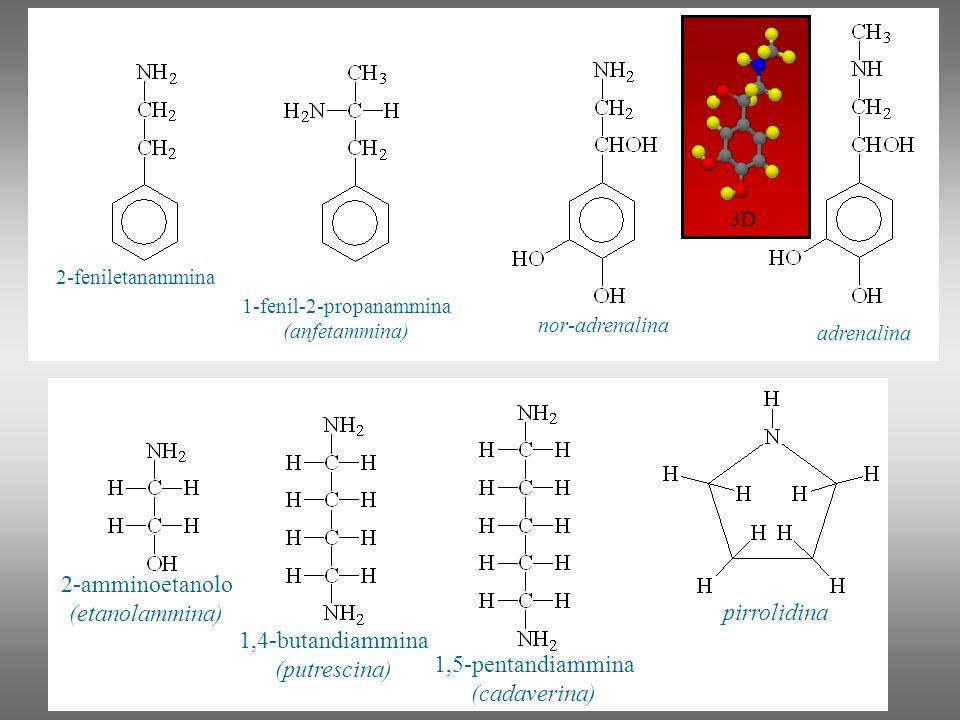 Ammidi Le ammidi, fra i derivati degli acidi carbossilici, sono quelle meno reattive e sono largamente diffuse in natura.