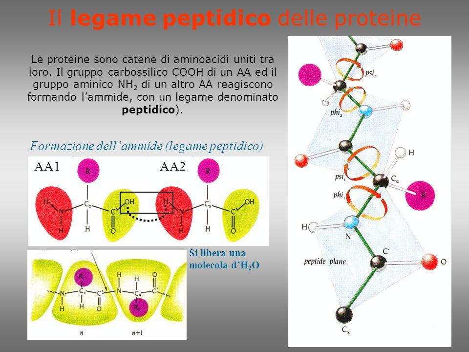 Biochimica del legame H è una delle interazioni fondamentali dellorganizzazione molecolare dei sistemi viventi.