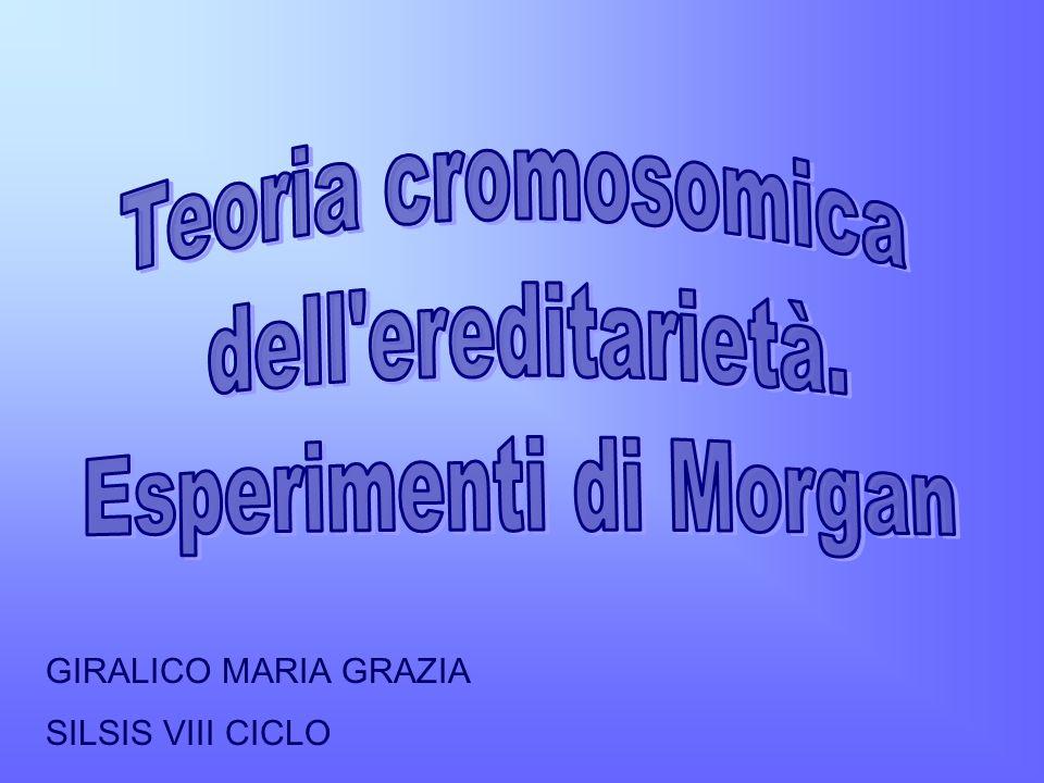 GIRALICO MARIA GRAZIA SILSIS VIII CICLO