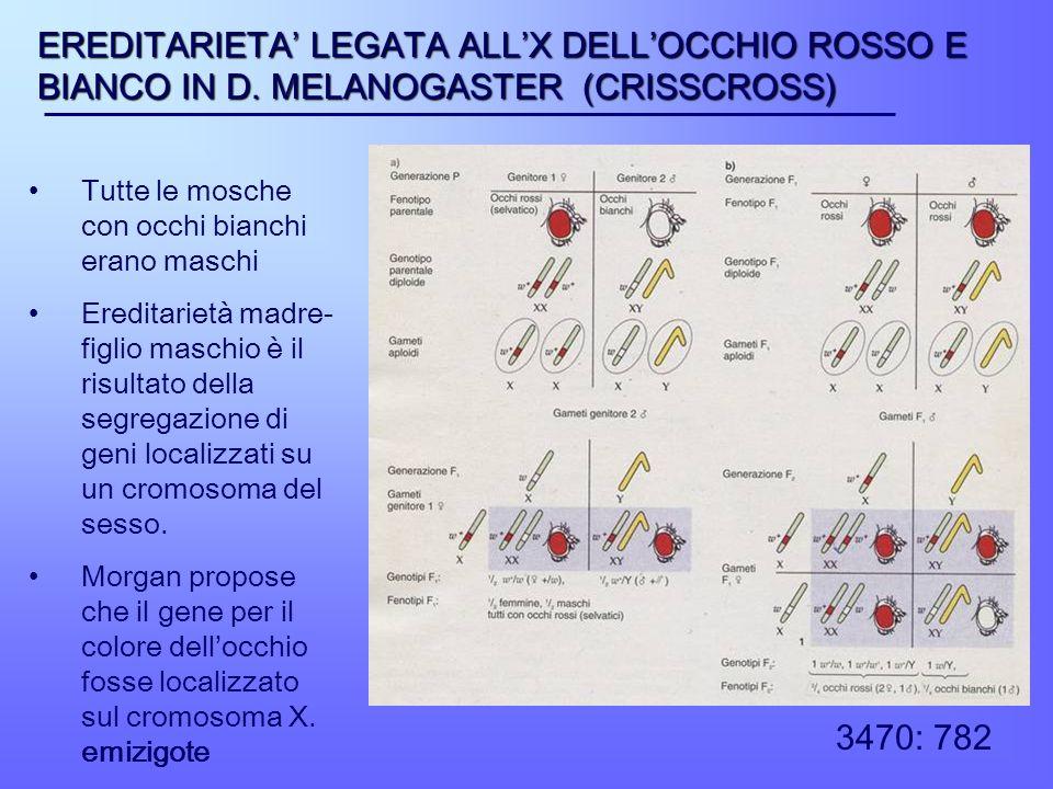 EREDITARIETA LEGATA ALLX DELLOCCHIO ROSSO E BIANCO IN D. MELANOGASTER (CRISSCROSS) Tutte le mosche con occhi bianchi erano maschi Ereditarietà madre-