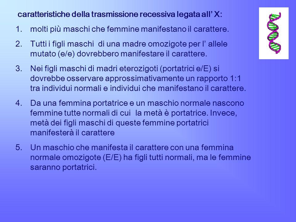 caratteristiche della trasmissione recessiva legata all X: 1.molti più maschi che femmine manifestano il carattere. 2.Tutti i figli maschi di una madr