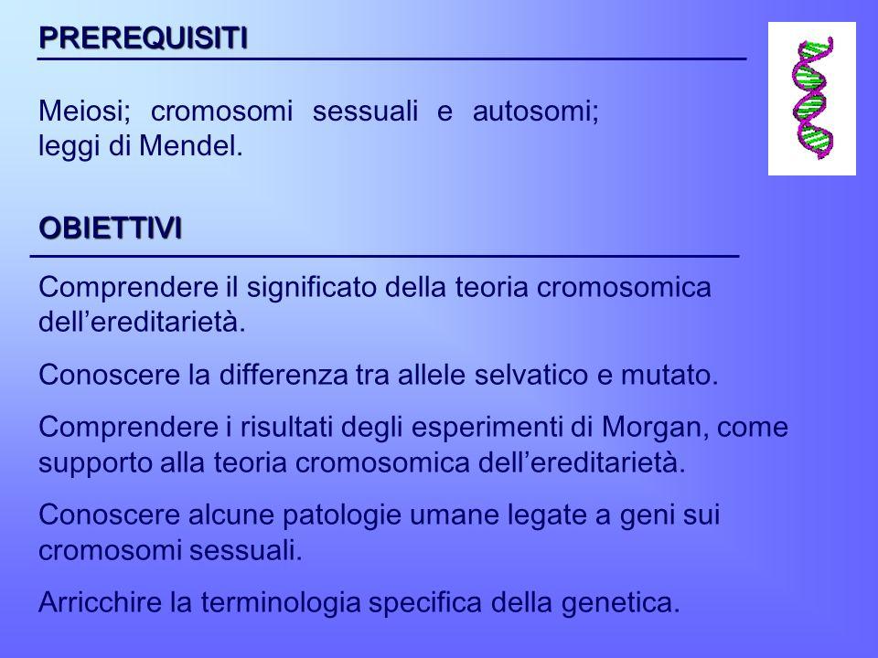 PREREQUISITI Meiosi; cromosomi sessuali e autosomi; leggi di Mendel. OBIETTIVI Comprendere il significato della teoria cromosomica dellereditarietà. C