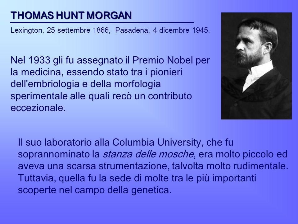 THOMAS HUNT MORGAN Lexington, 25 settembre 1866, Pasadena, 4 dicembre 1945. Nel 1933 gli fu assegnato il Premio Nobel per la medicina, essendo stato t