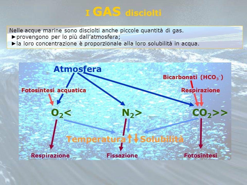 Atmosfera Bicarbonati (HCO 3 - ) Fotosintesi acquatica Respirazione O 2 CO 2 >> Temperatura Solubilità Respirazione Fissazione Fotosintesi I GAS disci