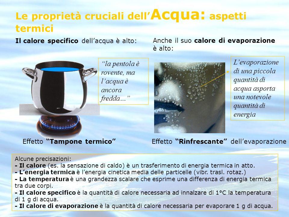 Le proprietà cruciali dell Acqua: aspetti termici Il calore specifico dellacqua è alto: la pentola è rovente, ma lacqua è ancora fredda… Effetto Tampo