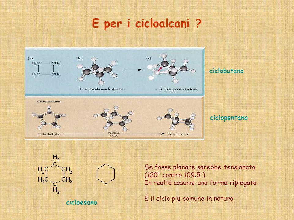 E per i cicloalcani ? ciclobutano ciclopentano Se fosse planare sarebbe tensionato (120° contro 109.5°) In realtà assume una forma ripiegata È il cicl