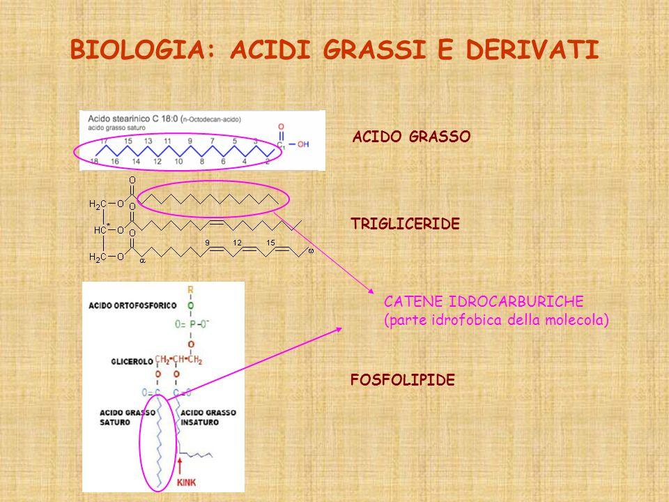 BIOLOGIA: ACIDI GRASSI E DERIVATI ACIDO GRASSO TRIGLICERIDE FOSFOLIPIDE CATENE IDROCARBURICHE (parte idrofobica della molecola)