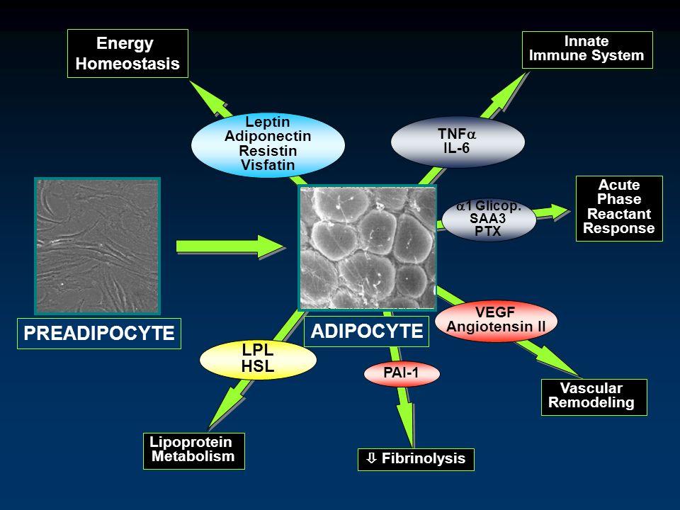 Energy Homeostasis Leptin Adiponectin Resistin Visfatin 1 Glicop. SAA3 PTX Innate Immune System TNF IL-6 Acute Phase Reactant Response VEGF Angiotensi