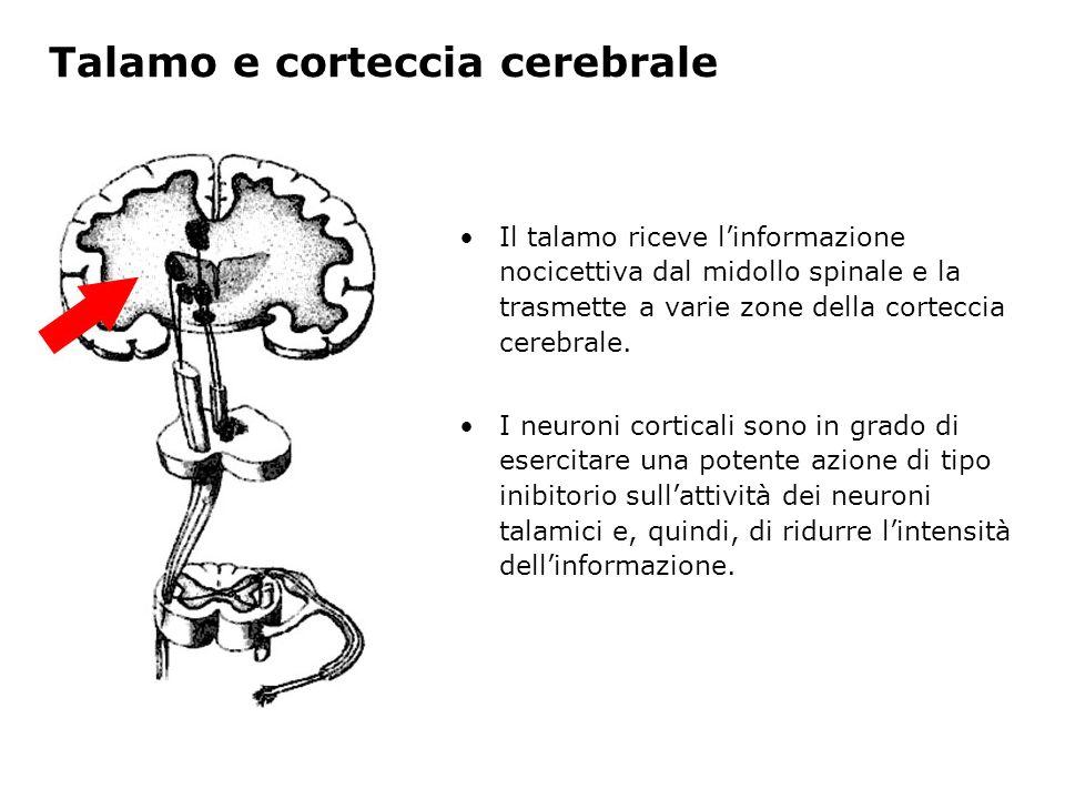 Talamo e corteccia cerebrale Il talamo riceve linformazione nocicettiva dal midollo spinale e la trasmette a varie zone della corteccia cerebrale. I n