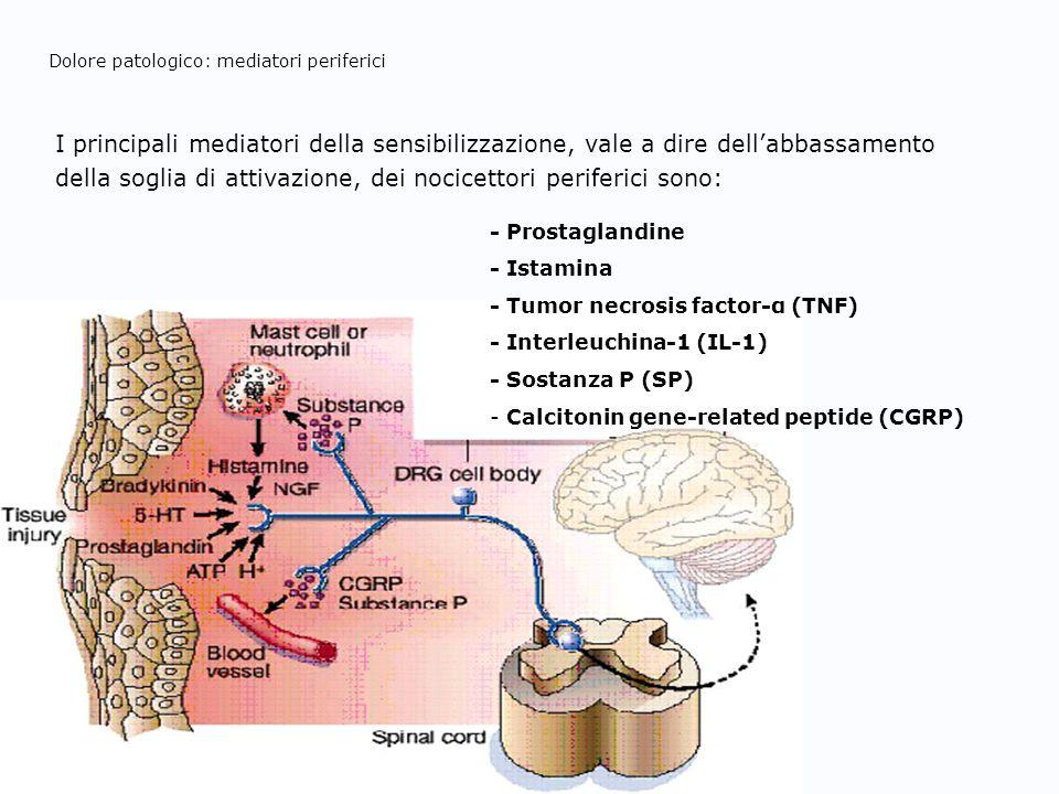 Dolore patologico: mediatori periferici I principali mediatori della sensibilizzazione, vale a dire dellabbassamento della soglia di attivazione, dei
