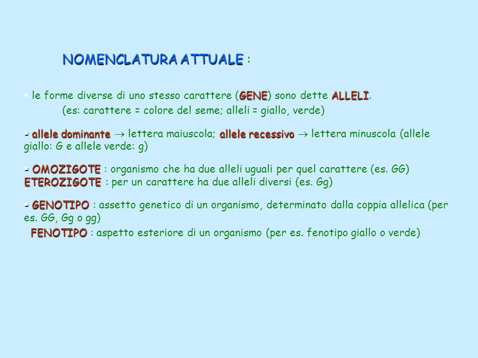 NOMENCLATURA ATTUALE NOMENCLATURA ATTUALE : GENEALLELI le forme diverse di uno stesso carattere (GENE) sono dette ALLELI. (es: carattere = colore del