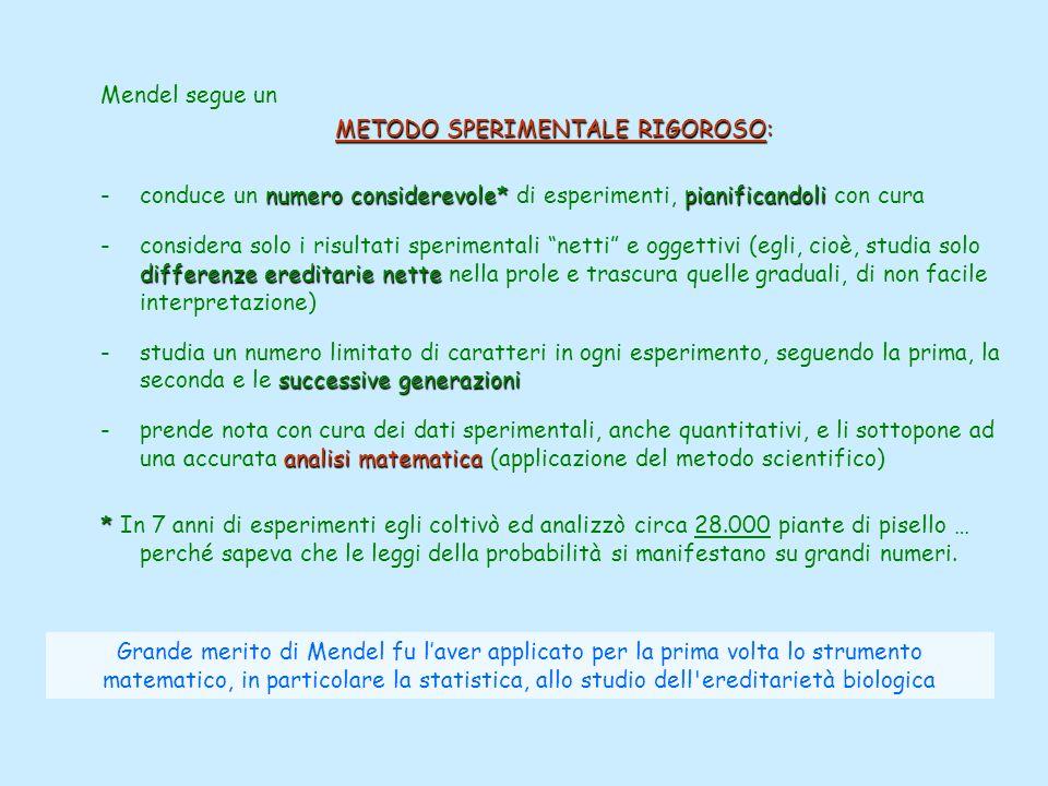 Mendel segue un METODO SPERIMENTALE RIGOROSO: numero considerevole*pianificandoli -conduce un numero considerevole* di esperimenti, pianificandoli con