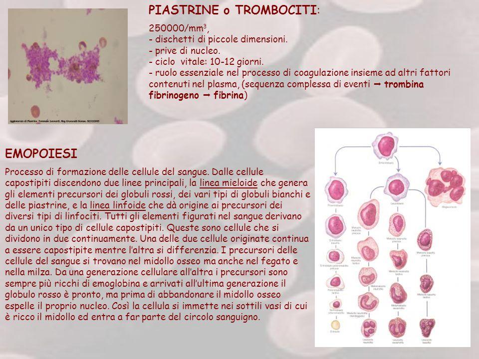 PIASTRINE o TROMBOCITI: 250000/mm 3, - dischetti di piccole dimensioni. - prive di nucleo. - ciclo vitale: 10-12 giorni. - ruolo essenziale nel proces
