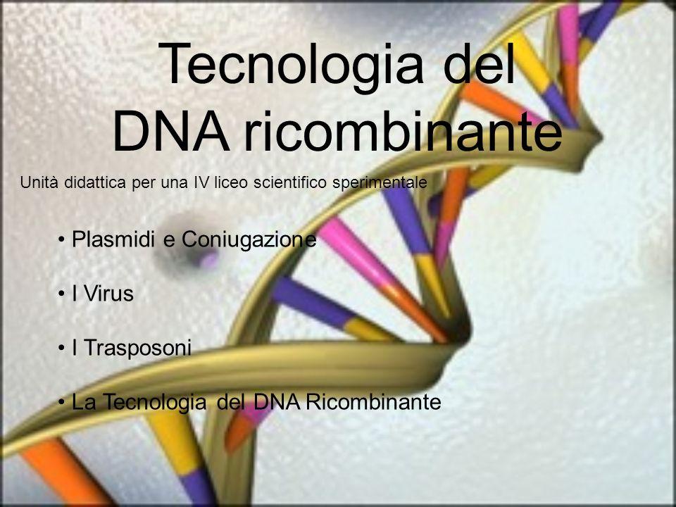 Tecnologia del DNA ricombinante Unità didattica per una IV liceo scientifico sperimentale Plasmidi e Coniugazione I Virus I Trasposoni La Tecnologia del DNA Ricombinante