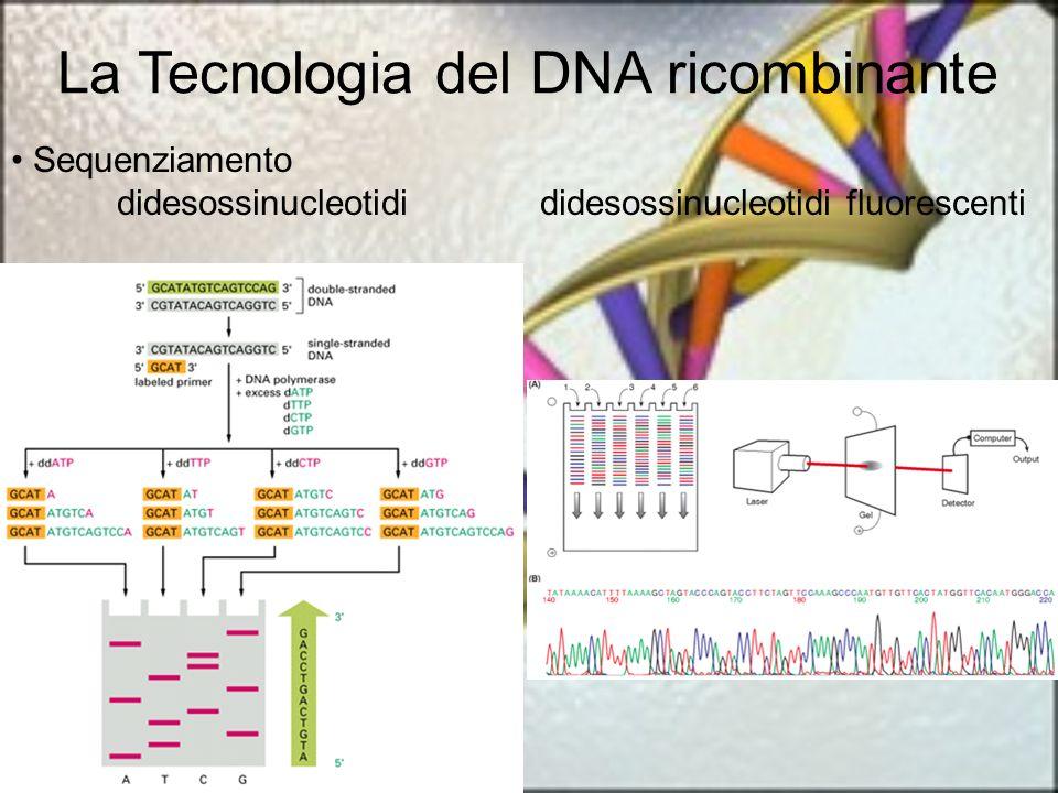 La Tecnologia del DNA ricombinante Sequenziamento didesossinucleotidididesossinucleotidi fluorescenti