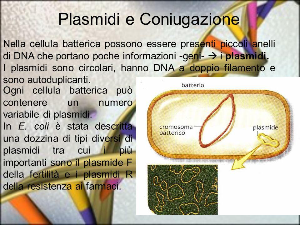 Nella cellula batterica possono essere presenti piccoli anelli di DNA che portano poche informazioni -geni- i plasmidi. I plasmidi sono circolari, han