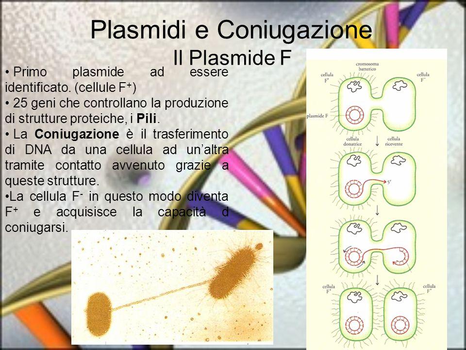 Plasmidi e Coniugazione Il Plasmide F Primo plasmide ad essere identificato. (cellule F + ) 25 geni che controllano la produzione di strutture proteic